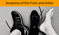 New Physit Blog. Anatomy of the foot and ankle